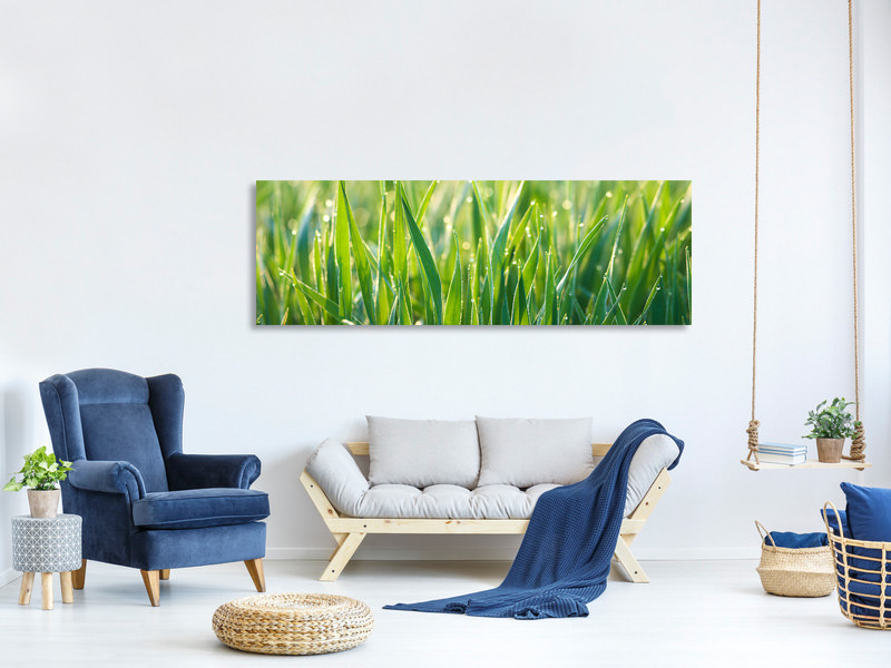 Panoramic Canvas Print Grass with morning dew XL