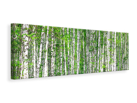 Canvasfoto panaoramaformaat The Birch Forest