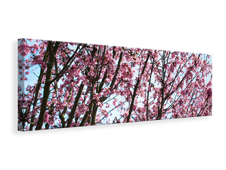 Canvasfoto panaoramaformaat Japanese Cherry Blossom