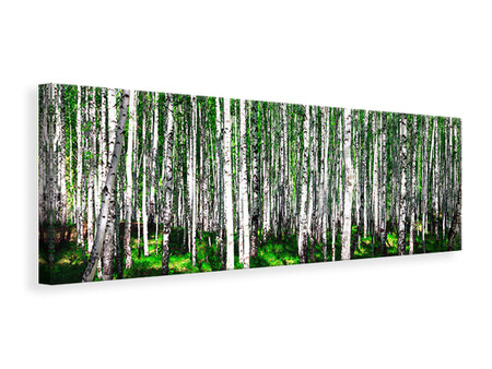 Canvasfoto panaoramaformaat Summerly Birch Forest