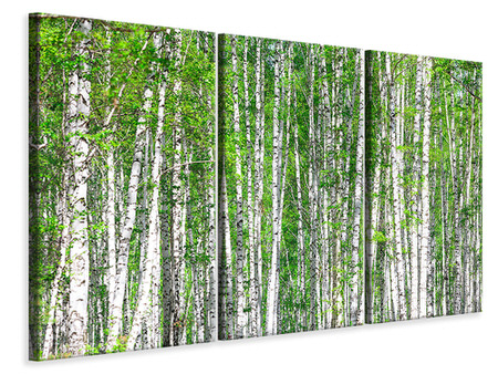 Canvasfoto 3-delig The Birch Forest