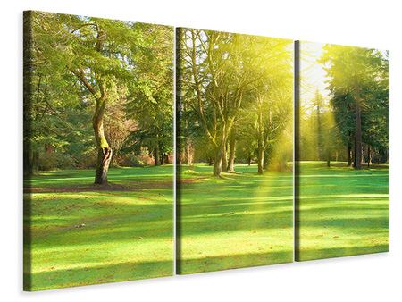 3 Piece Canvas Print In The Park