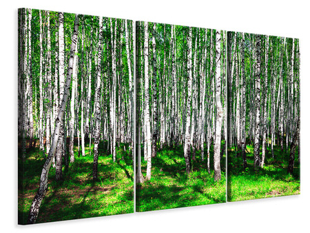 Canvasfoto 3-delig Summerly Birch Forest