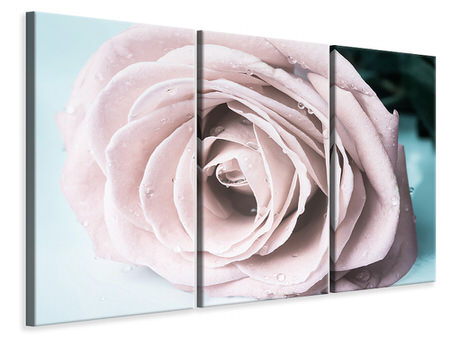 3 Piece Canvas Print Pastel Rose