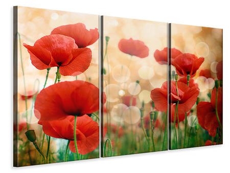 Canvasfoto 3-delig The Poppy