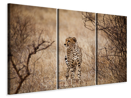 3 Piece Canvas Print Elegant Cheetah