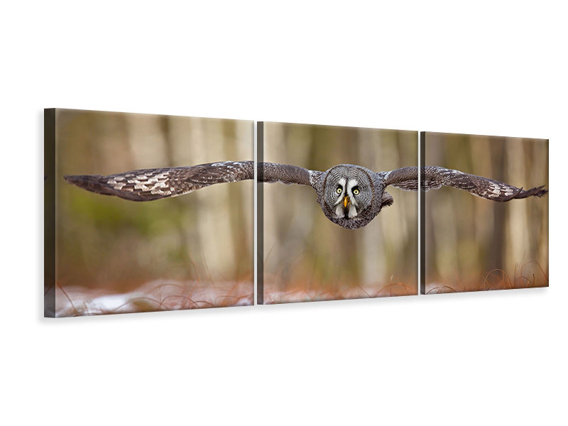 Panoramic Canvasfoto 3-delig Great Grey Owl