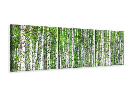 Panoramic Canvasfoto 3-delig The Birch Forest