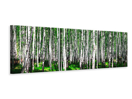 Panoramic Canvasfoto 3-delig Summerly Birch Forest