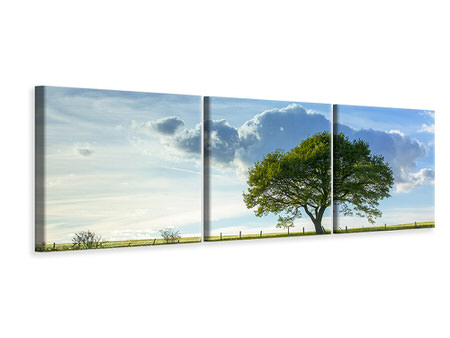 Panoramic Canvasfoto 3-delig Spring Tree
