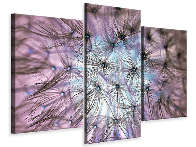 Modern 3 Piece Canvas Print Dandelion in the light play