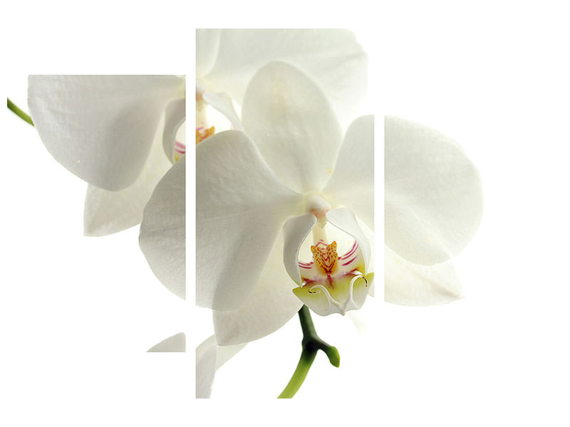 Modern 3 Piece Canvas Print Orchids bloom