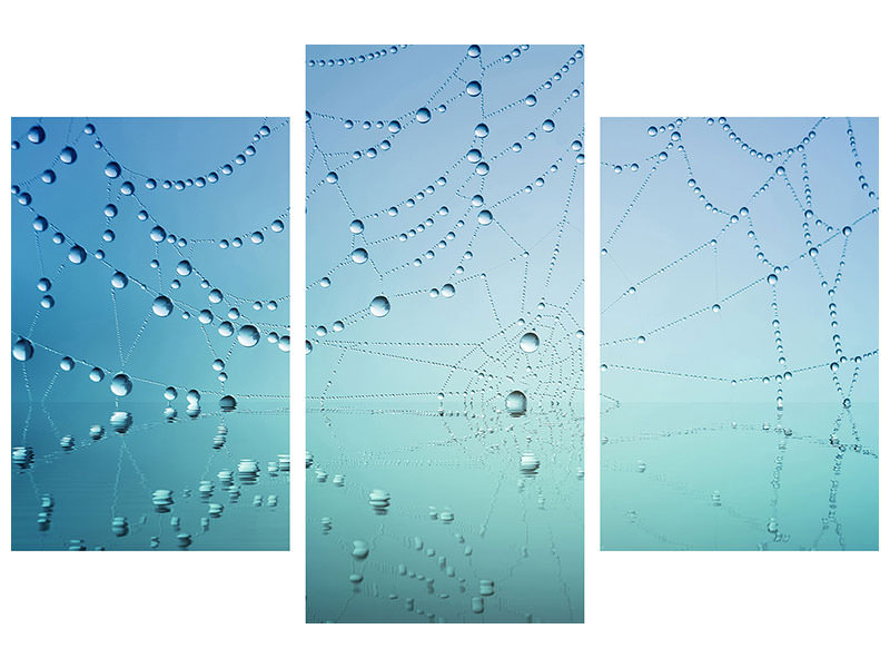 Canvasfoto 3-delig modern Cobweb in morning dew