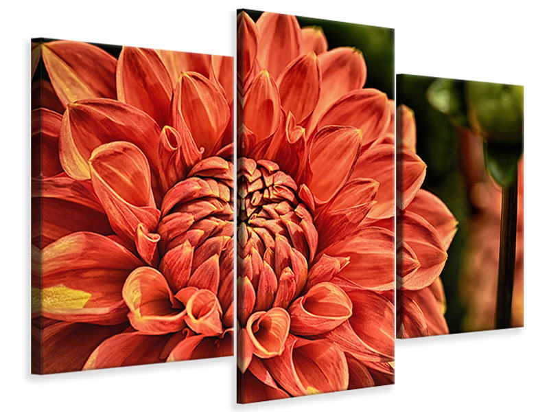 Canvasfoto 3-delig modern Painting of a dahlia