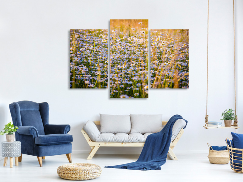 Modern 3 Piece Canvas Print A field full of camomile