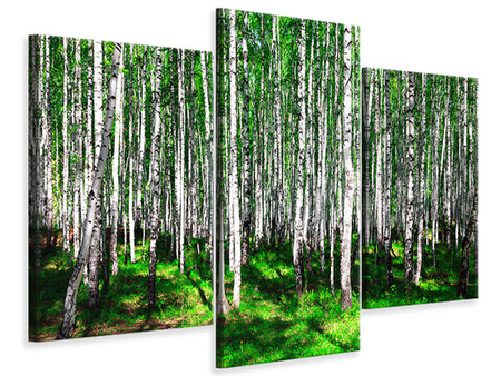 Canvasfoto 3-delig modern Summerly Birch Forest