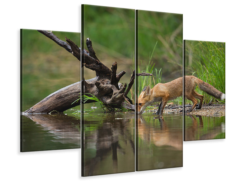 4 Piece Canvas Print Red Fox II