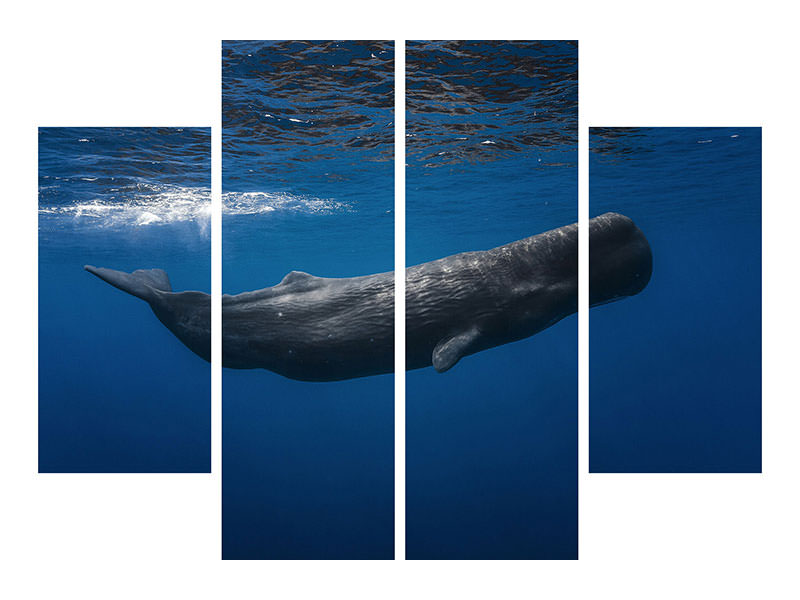 Canvasfoto 4-delig Sperm Whale