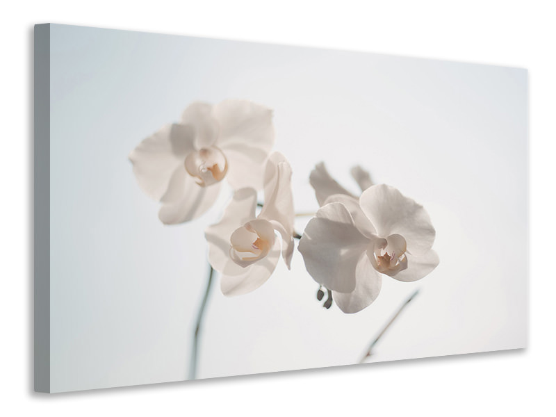 Canvas print Graceful orchids