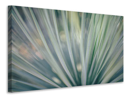 Canvasfoto Strip of plant