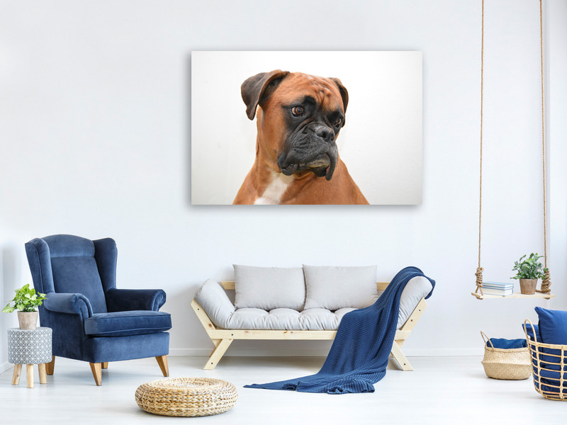 Canvasfoto Typical boxer