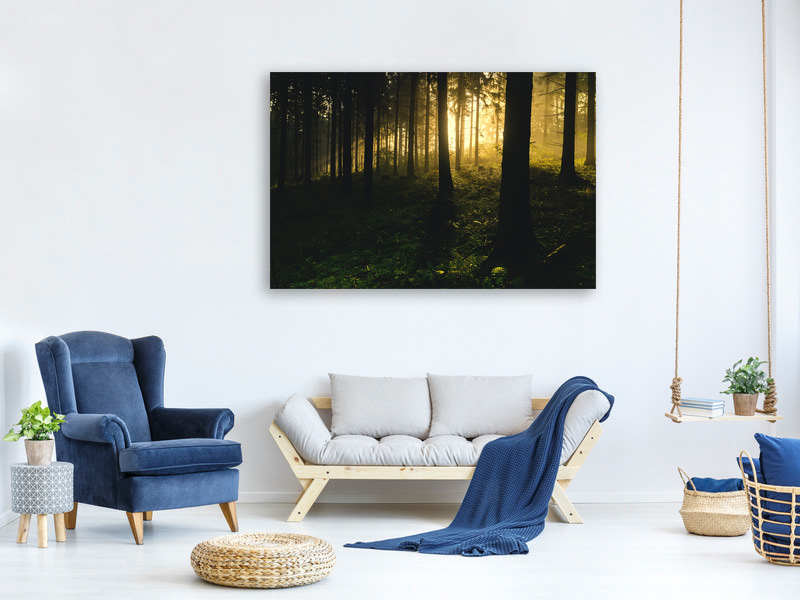 Canvas print Sunset in the forest