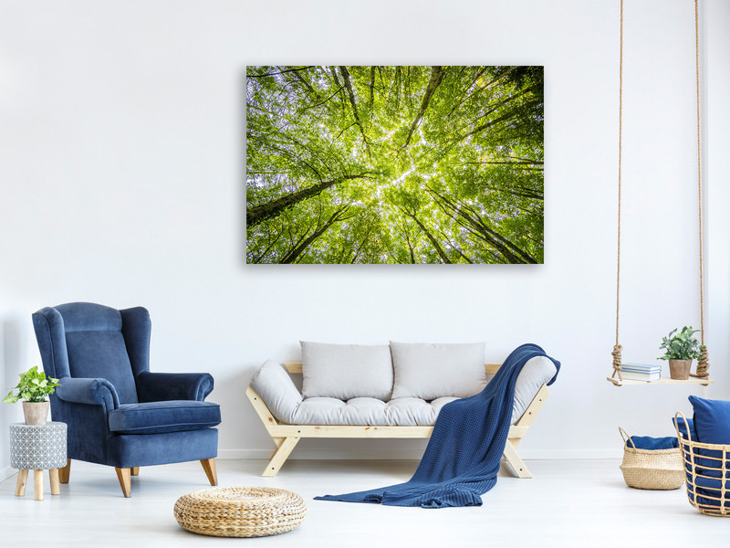 Canvas print Under the treetops