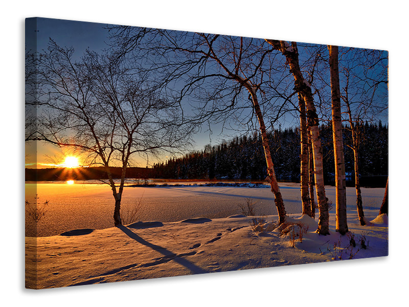 Canvas print Birches in the sunset