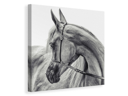 Canvas print The Arabian Horse