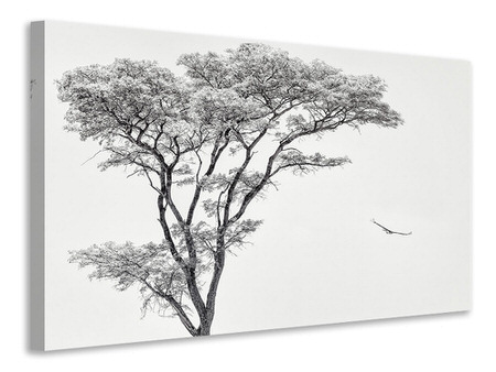 Canvas print The African Eagle