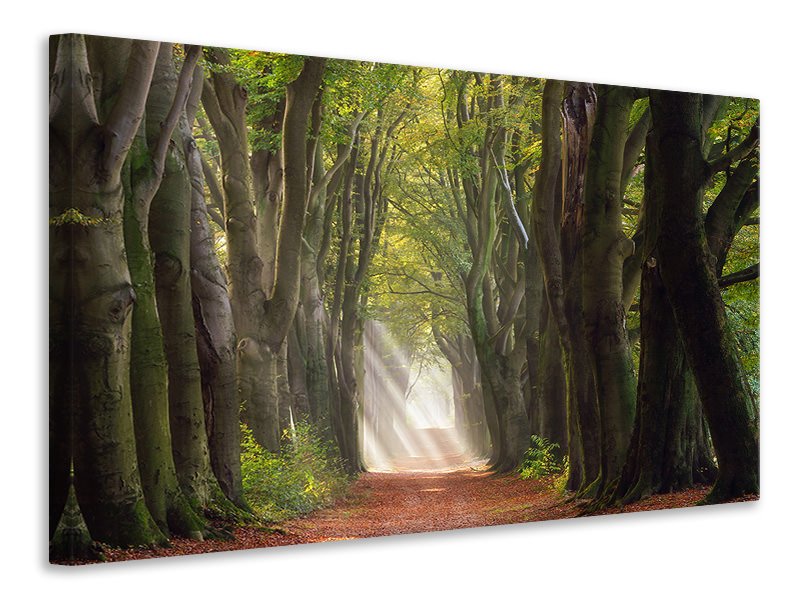 Canvas print A Glorious Day