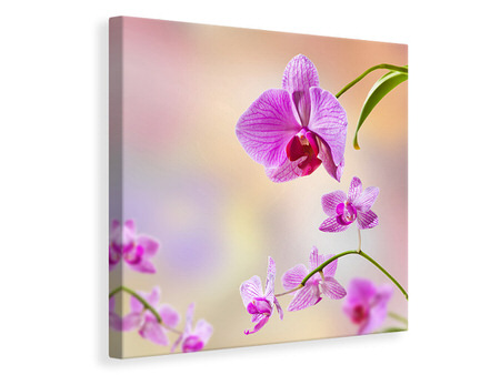 Canvas print Romantic Orchids