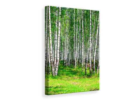 Canvasfoto The Birch Forest In Summer