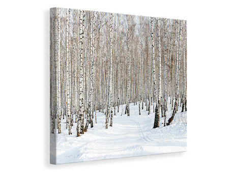 Canvasfoto Birch Forest Tracks In Snow