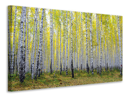 Canvasfoto Autumnal Birch Forest