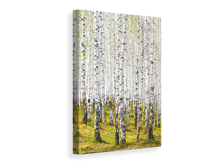 Canvasfoto The Birch Forest In The Spring