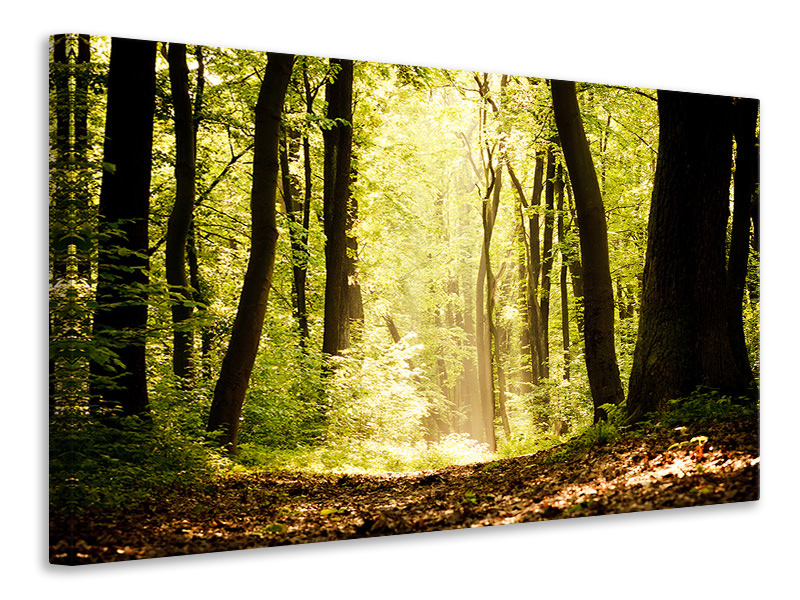 Canvasfoto Sunrise In The Forest
