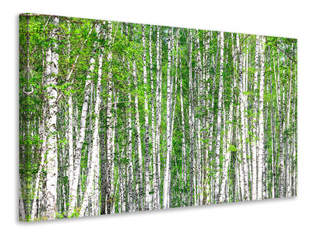 Canvasfoto The Birch Forest