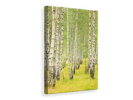 Canvasfoto The Birch Forest In Late Summer
