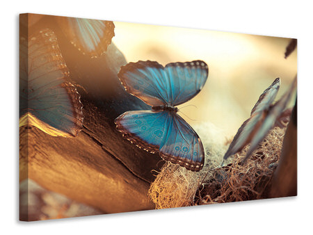 Canvasfoto Butterflies