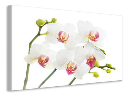 Canvas print Orchids Love