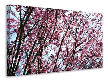 Canvasfoto Japanese Cherry Blossom