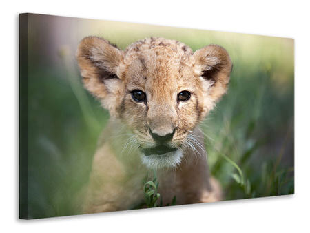 Canvas print Lion Baby