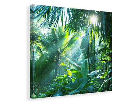Canvasfoto In Tropical Forest