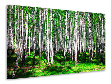 Canvasfoto Summerly Birch Forest