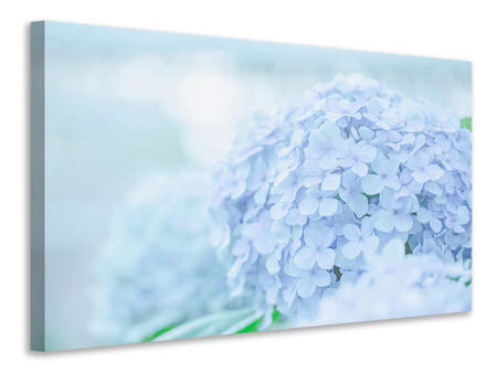 Canvas print The Hydrangea