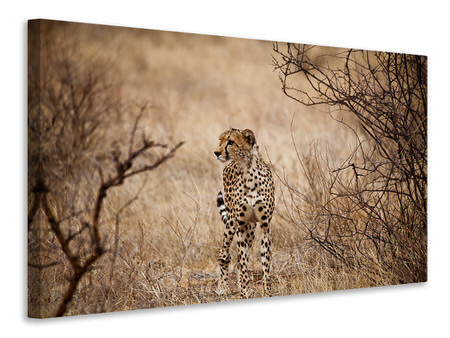 Canvas print Elegant Cheetah